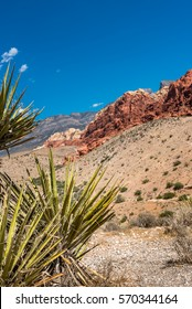 Left corner with desert cacti and red and tan sandstone mountains in background with blue sky