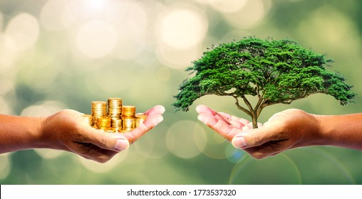 The left hand holds money. Right hand holding a tree There is a bokeh background. Design concept Nature or capitalism.