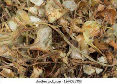 Left over onions skins are a  rich source of flavonoids, quercetin, antioxidants and anti-inflammatory.