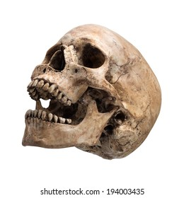 Left side view of human skull open mouth on isolated white background