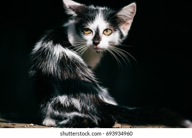 Left urban homeless kitty sitting in abstract shadow on black background, looking around. Furry vagrant cute cat outdoor. Lost hungry domestic animal looking for home and food. Pet looking at camera.