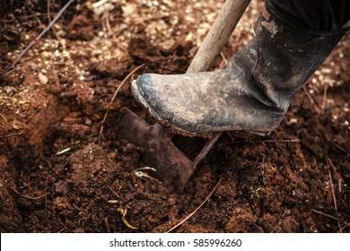 Leg in gumboot on shovel digging the soil.