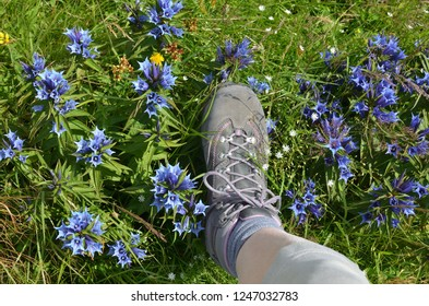 Leg in tracking shoe stepping on mountain field with wild flowers