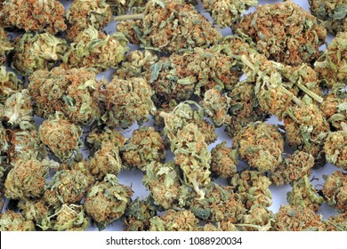 Legal grass ( weed ) with low thc and high cbd to smoke - light drug and cannabis - marijuana flowers  - drugs and illegal