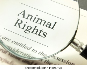 Legal protection and animal rights concept
