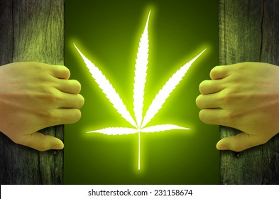 """""""Legalize cannabis marijuana"""" concept. Marijuana leaf floating and glowing inside, after hand opened a wooden door."""