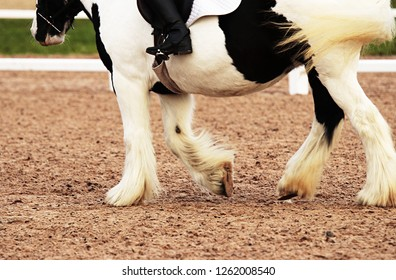The legs and feathered,hooves of a cobby piebald horse being ridden in a sandy arena during a dressage competition.
