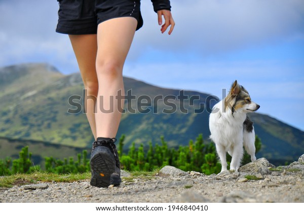 The legs of a fit woman. Hiking in mountains with adopted dog from shelter (hybrid of spitz). Adventure. Hiking boots, mountains in the background. Low Tatras national park, Slovakia. Summer nature.