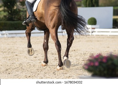 Legs and hoofs of a horse in a dressage grand prix test doing half pass