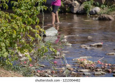 legs of little girl wading in a rocky creek out of focus with greenery on bank in full focus and reflection of her pink shirt with apples floating in water - Selective focus and bokeh