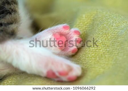 legs-little-kitten-gentle-scene-450w-109