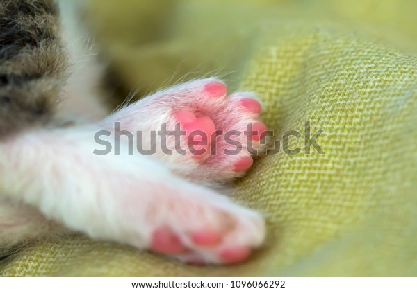legs-little-kitten-gentle-scene-600w-109
