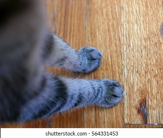 Legs and paws of a young tabby cat on a wooden floor, seen from above
