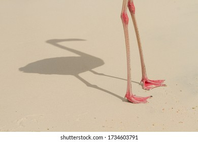 Legs and shadow of a flamingo on the beach