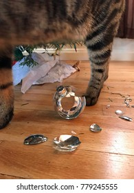 Legs of tabby cat with broken christmas ornaments under the tree