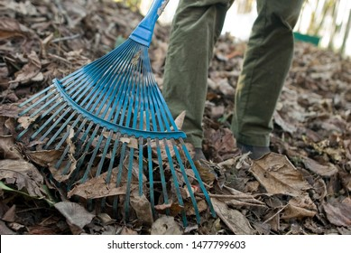 legs of a woman who has removal, raking, dry, brown leaves fallen from the trees, with a gardening rake, autumn, fall, seasons, gardening, work, legs,cleaning, maintenance, brown, cold, Italy