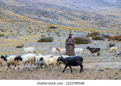 LEH LADAKH, INDIA - SEPTEMBER 25, 2018: An unknown shepherd is taking care his flock on the mountain.