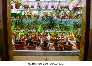 LEIDEN, NETHERLANDS - Aug 13, 2021: The growing greens plants in the flowerpots in the historical Naturalis Biodiversity Center Museum