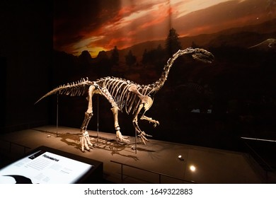 Leiden, The Netherlands - February 18, 2020: A skeleton of a dinosaur in the Naturalis Biodiversity Center in Leiden. Founded in 1820 the museum has a collection of almost 40 million objects