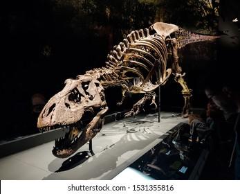 LEIDEN, THE NETHERLANDS - OCTOBER 5, 2019: People visit the skeleton of Tyrannosaurus Rex Trix in Naturalis Biodiversity Center in Leiden, The Netherlands, on October 5, 2019