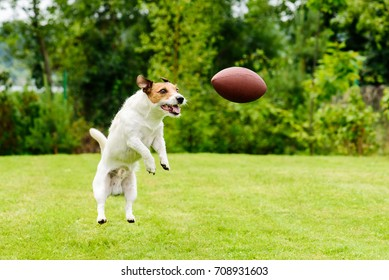 Leisure time at back yard with american football ball and pet