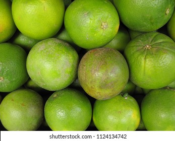 Lemmon citrus infected with HLB yellow dragon citrus greening is one of the most devastating diseases of citrus