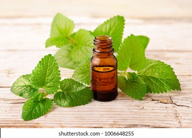 lemon balm essential oil in the bottle, with fresh leaves