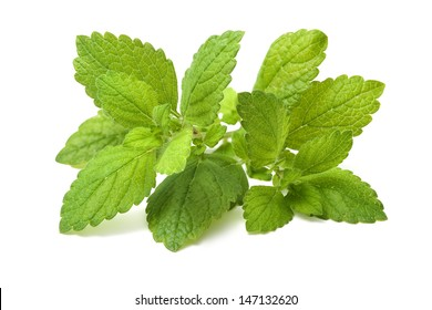 Lemon balm. Fresh green leaf of melissa isolated on white