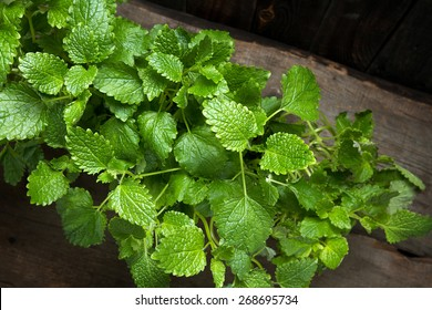 Lemon balm growing in tins