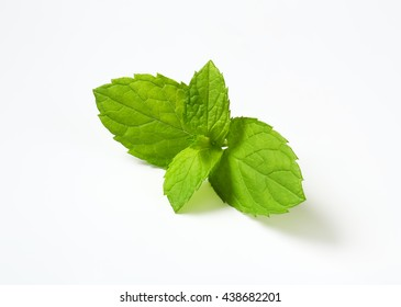 lemon balm leaves on white background