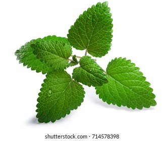 Lemon balm (Melissa officinalis), fresh. Clipping paths, shadow separated