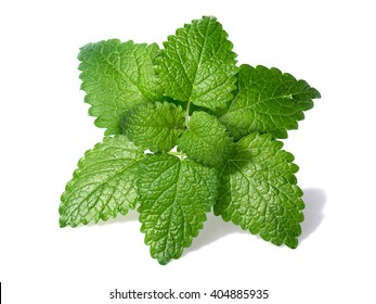 Lemon balm (Melissa officinalis) leaves with few droplets. Clipping paths for both leaves and shadow, large depth of field