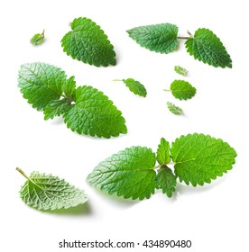Lemon balm (Melissa officinalis) leaves collection close-up isolated on white  background