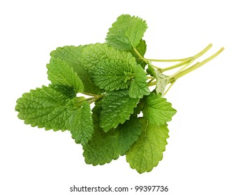 Lemon balm sprig isolated on white