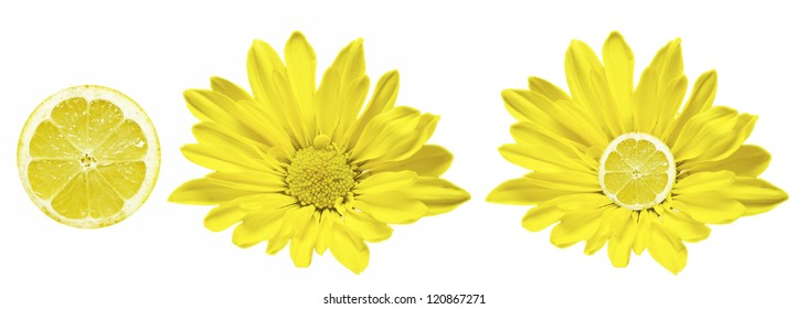 Lemon Flower isolated on white