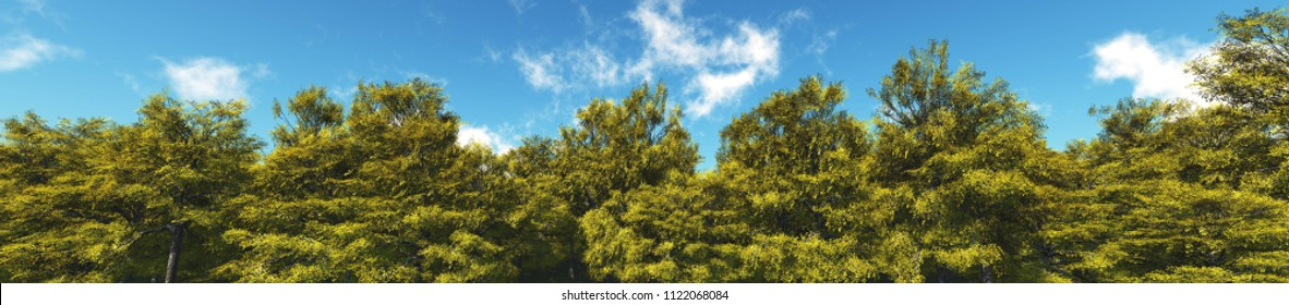 Lemon Grove. Panorama of trees against the sky with clouds.