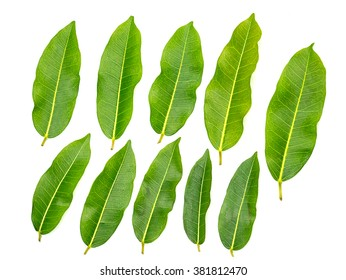 Lemon leaf on a white background