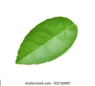Lemon leaves isolated on white background.