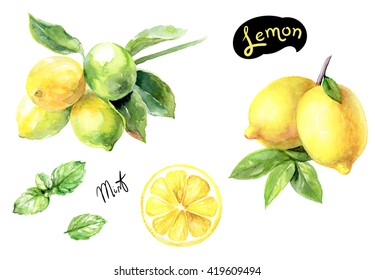 Lemon and mint watercolor illustration. Citrus fruit branch lemon, lemon slice, mint watercolor isolated on white background.