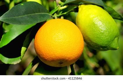 Lemon and orange fruit.