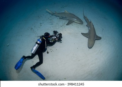 Lemon sharks with videographer / photographer in the dusk.