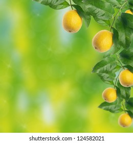 Lemon tree with bokeh background