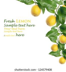 lemon tree with white background