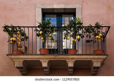 Lemon trees on balcony in Toarmina, Italy