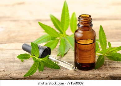 Lemon Verbena essential oil and leaves on the wooden board