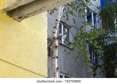 Lemon, yellow textured wall of the house with a concrete support, gray wall with windows, green birch, bright sunlight. Summer courtyard