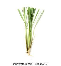 Lemongrass herb on white background