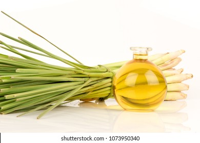 Lemongrass, plants, vegetables and herbs of Thailand have medicinal properties (fresh and infusion for oil or essential oil)