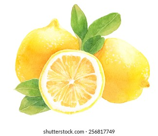 Lemons with leaves. Watercolor illustration.