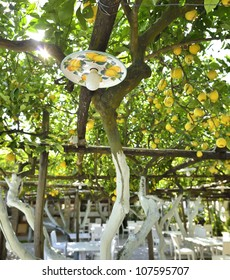 Lemons trees on Capri Island